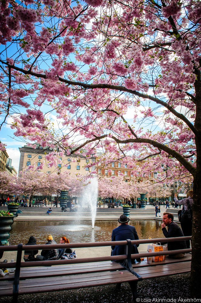 2015_CherryBlossoms_020