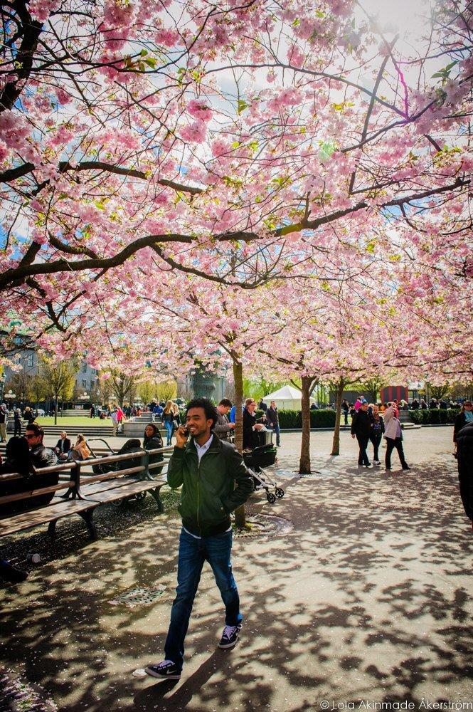 2015_CherryBlossoms_024
