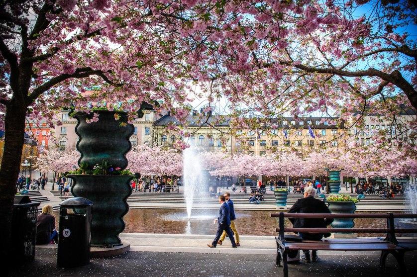 2015_CherryBlossoms_053
