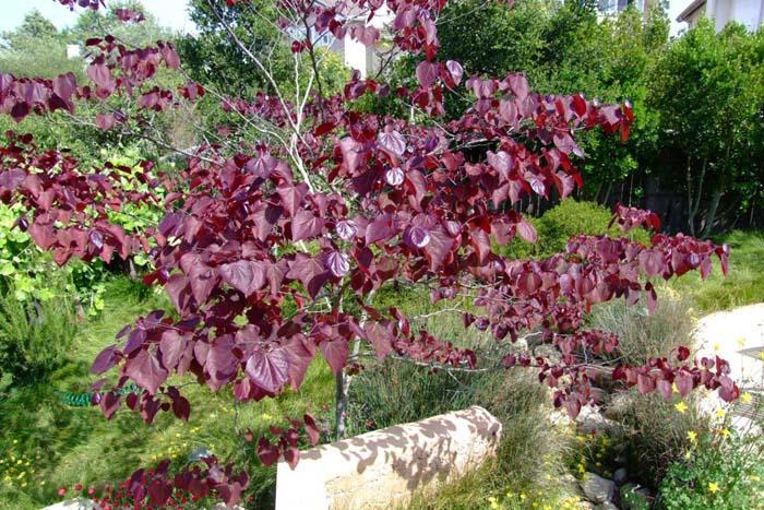 Leaves Mulching Fall