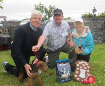 Tillie-Welsh-Terrier-Padr