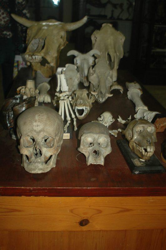 Museo Anatomico Veterinario