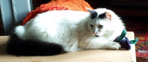 Mozzie, a white cat with black tail and spots on the ears and chin