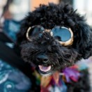 """It is an amazing privilege to be able to report on Poodle Day. The entire event opened my eyes to the endless possibilities for poodle-tivity."""