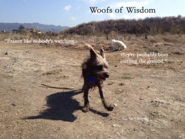 Woofs of Wisdom copy