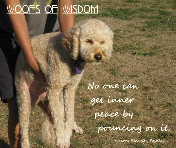 Small Poodle at Large | Woofs of Wisdom | Harper B.