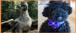 Hippogriffs and Poodles: Friends or Foes?