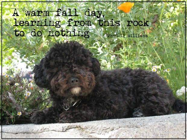 Harper B. | Small Poodle at Large | Dog Blog | Poetry