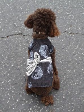 Yoko Ono poodle