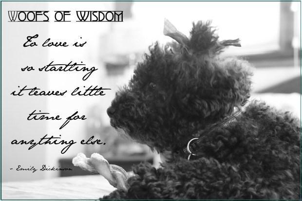 Harper B.   Small Poodle at Large   Dog Blog