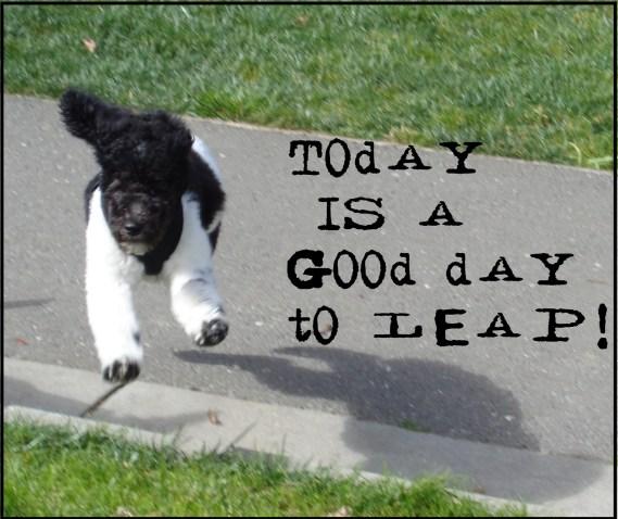 Small Poodle at Large   Harper B.   Dog Blog