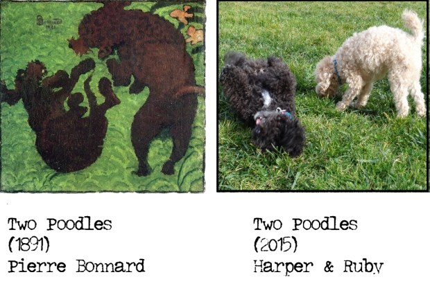Small Poodle at Large | Harper B. | Two Poodles x 2