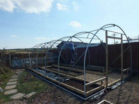 Chicory Chickens and Children polytunnel construction