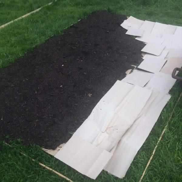 No dig plot - cardboard
