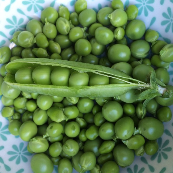 freshly podded peas