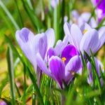 Spring is early – and the growing season is on