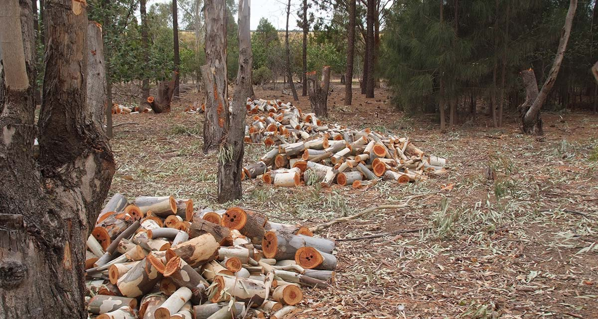 Are woodlots worthwhile?