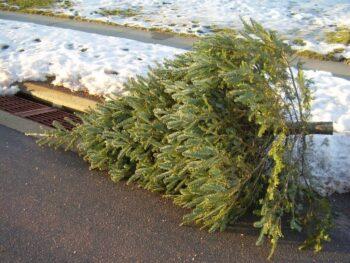 12 Eco Friendly Holiday Tips