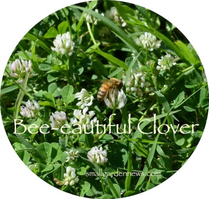 Clover is an important source of food for bees. Plant some!