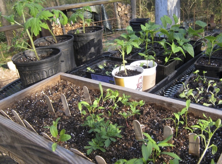 Great Gifts For Gardeners That You Can Make Include This Wooden Flat For  Starting Seeds.