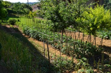 Large home vegetable gardens in Italy are still planted in rows.