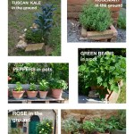 Examples of small garden ideas from Tuscany, for both in-ground and container gardens.