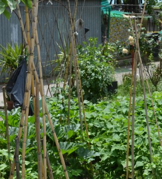 Small garden ideas from Tuscany include the use of poles to support plants.