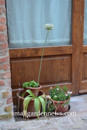 Doorstep gardens in Tuscany, like this one, often include a pot of basil.