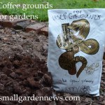 Coffee grounds (used) in and out of the free bags picked up at an independent coffee shop.