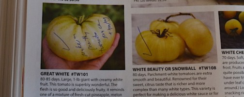Notes on the White Tomatoes page indicate that two did well in Electa's garden.