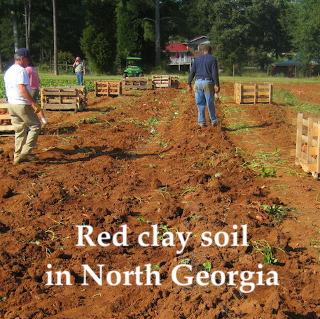 Small farm with red clay soil in north Georgia produces a lot of good food.