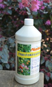 A fish fertilizer with fairly high nitrogen content, to encourage leafy growth.