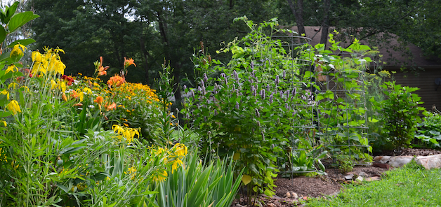 Masses of yellow and orange flowers growing at the left side of the garden are for pollinators. The right side of the garden is green, with vegetable plants that have less conspicuous flowers.