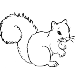 Line drawing of a squirrel, cartoon style
