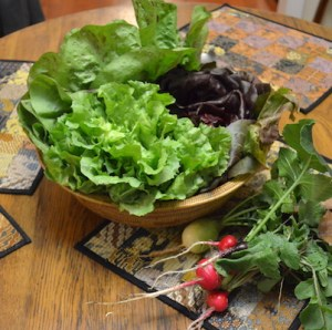 Shallow basket containing three kinds just-harvested greens, set behind a few red radishes with green leaves still attached, all set on a table.