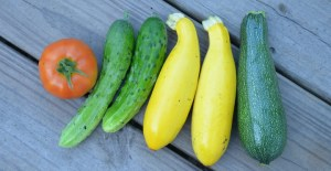 One day's harvest of cucumbers, green and yellow zucchinis, and a red tomato.