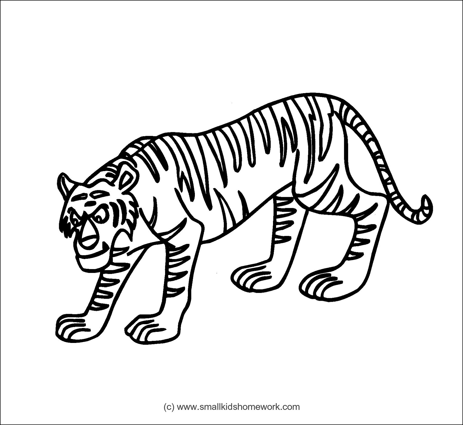 Tiger Outline And Coloring Picture With Interesting Facts