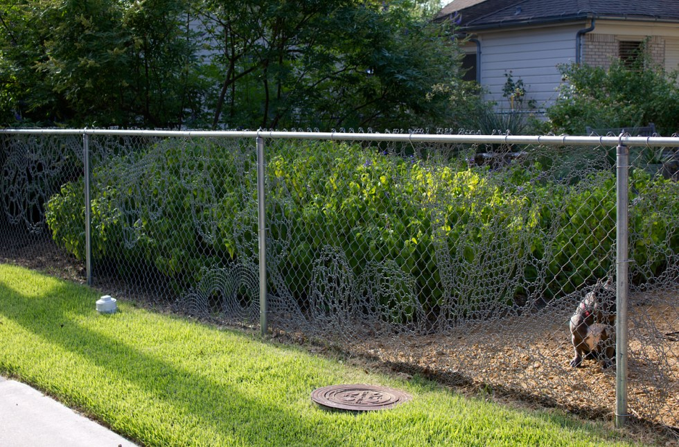 (above) This is how the Lace Fence looks now (July 2015) with a more mature garden.