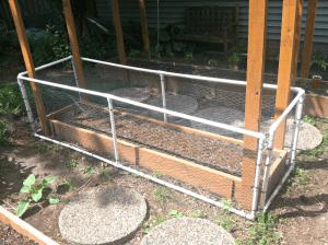 Raised bed; peas; bush beans; organic; gardening; garden; trellis; fencing