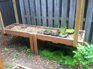 Raised beds; greens; lettuce; spinach; Swiss chard;basil; kale; ; organic; gardening; garden