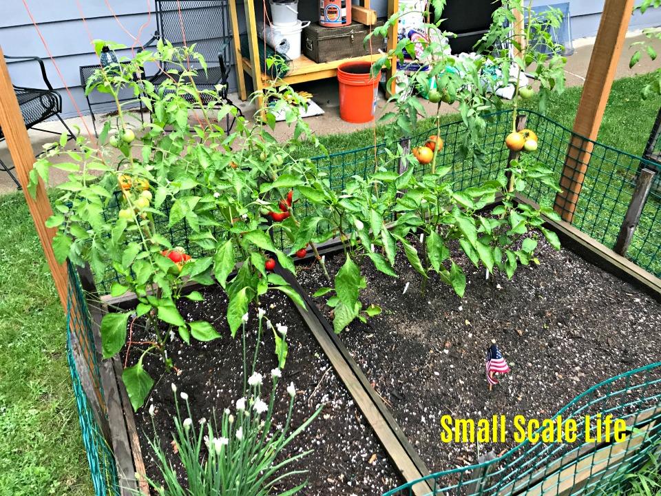 Square Foot Gardening; Garden; Minimalism; Urban Gardening; Podcast; Brand;  Peppers