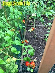 Square Foot Gardening; Garden; Minimalism; Urban Gardening; Podcast; Brand; Peppers; Facebook; trellis; tomatoes; cucumbers; Garden Update
