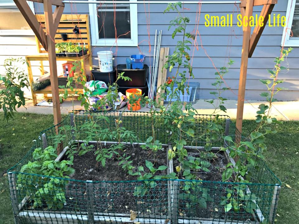 Square Foot Gardening; Garden; Minimalism; Urban Gardening; Podcast; Brand; Peppers; Facebook; trellis; tomatoes; cucumbers; melons; seedlings