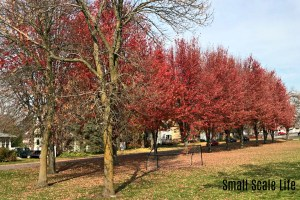 Fall, Fall Colors, Trees, Minnesota