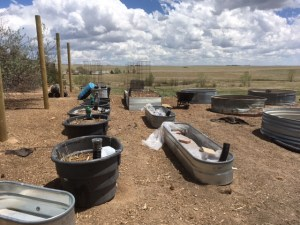 Regenerative Agriculture, homesteading, permaculture, wicking beds, wicking bed nation, podcast, Small Scale Life