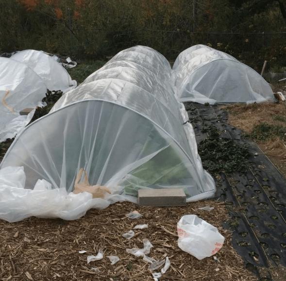 BellCast, urban farming, urban farm, small business, market garden, Dallas Half Acre Farm, Michael Bell, Small Scale Life Podcast, interview, podcast
