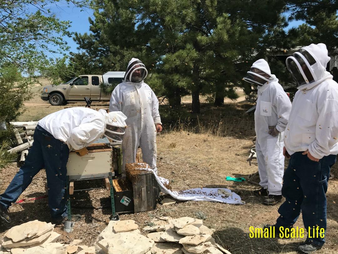 beekeeping, Colorado Regenerative Agriculture, Michael Jordan, Doneil Freeman