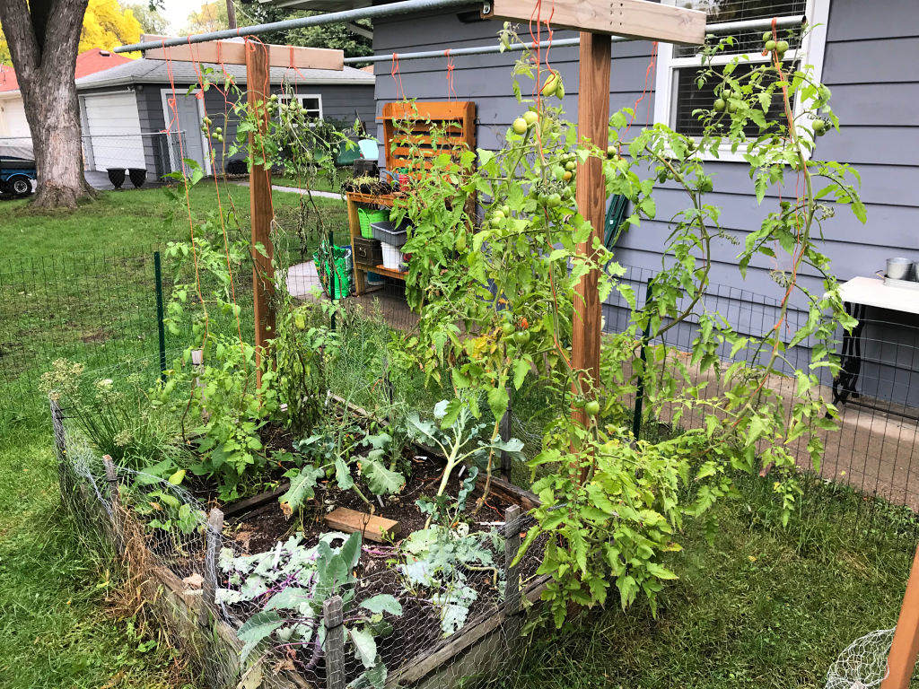 "arden Bed 2 after Karma's Walk-About and the ""First Frost.""  Tomatoes are still growing, and I'll nurse them along until the bitter end - October 2018"