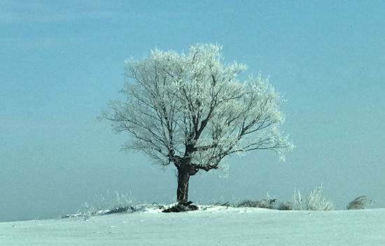 Building Community, News from Around the Bend, Tribe, Blog, Minnesota Winter, Tree of Ice