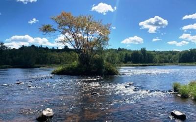 Meditation Stream: Tree of Life in Summer 2020